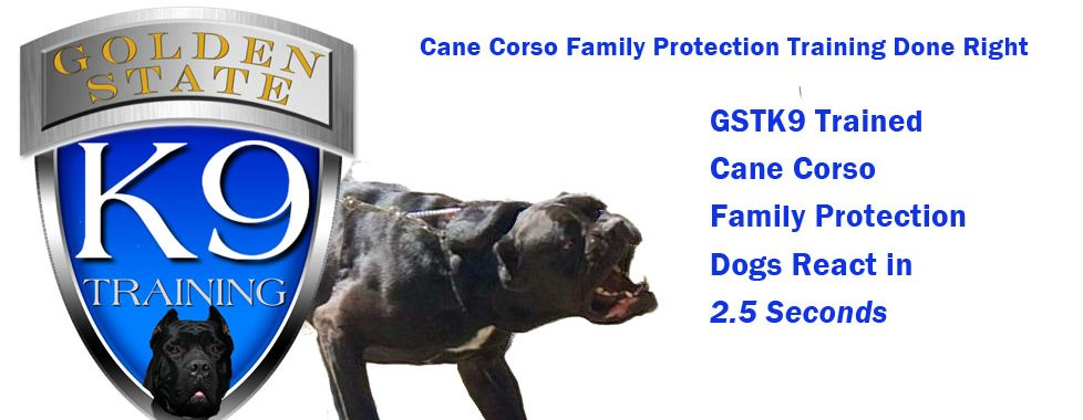 Cane Corso Family Protection Training by GSTK9