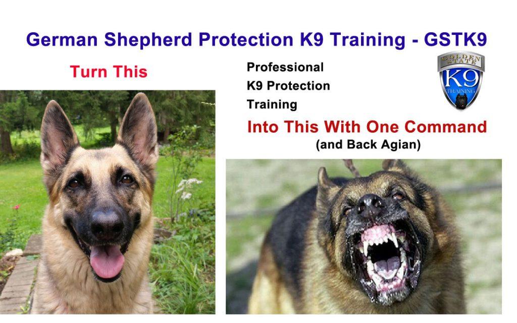 German Shepherd Protection K9 Training -GSTK9