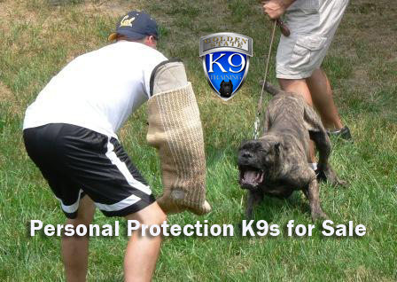 Personal Protection K9s for Sale